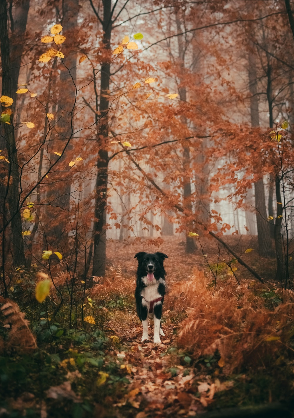 black and white dog in the middle of trees