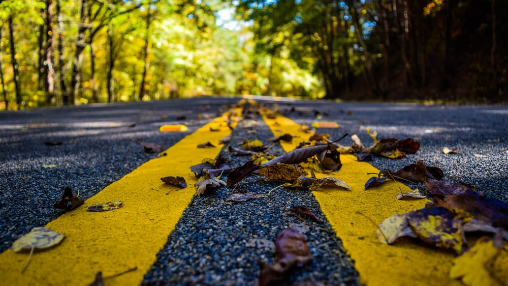 focus photo of dried leaves on concrete road with trees