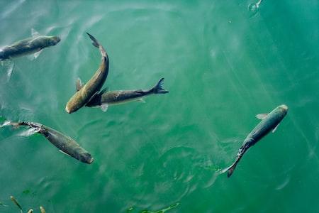 Onshore fiskeoppdrett