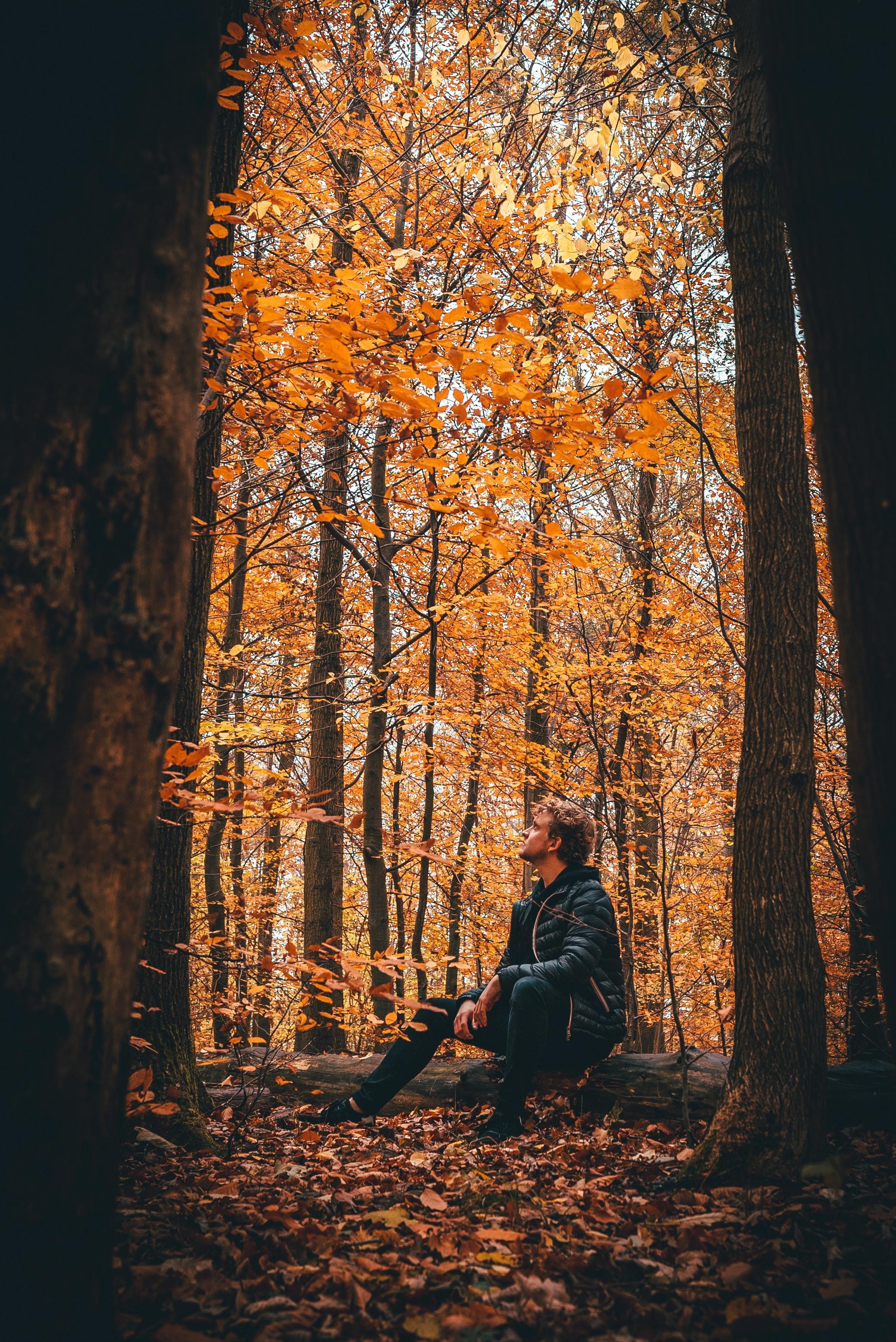 man sitting on fallen log between tree line