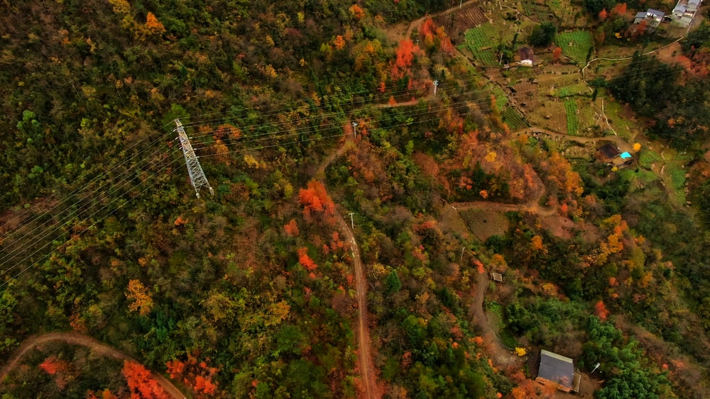areal view of trees and road during daytime