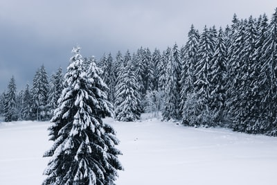 trees filled of snow during daytime