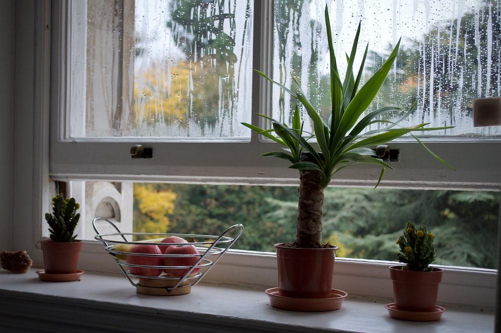 green plants beside apple tray near partially opened window