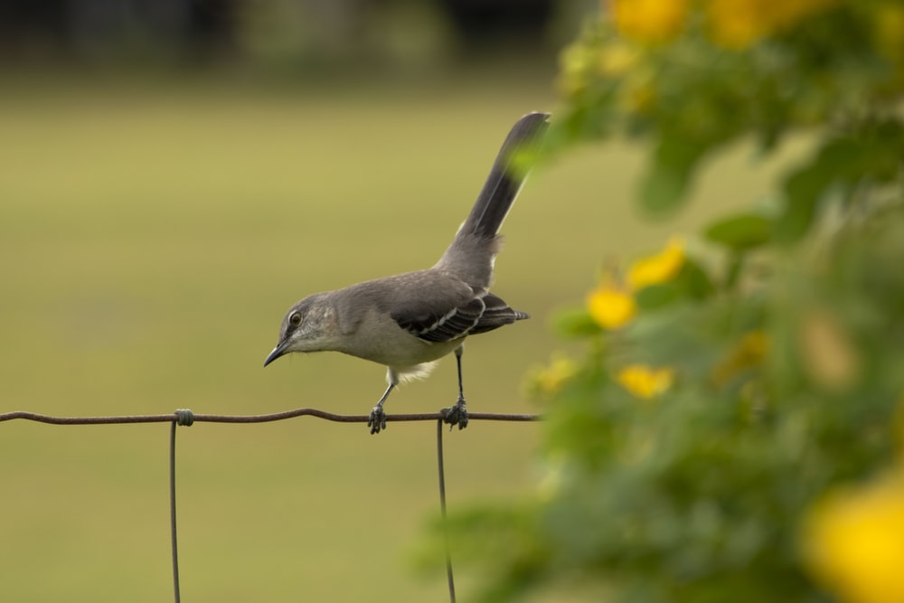 bird perching on fence near flower