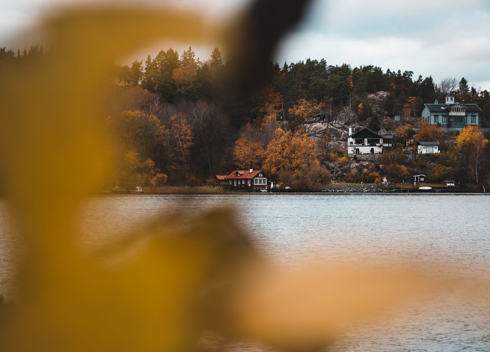 trees and houses beside body of water