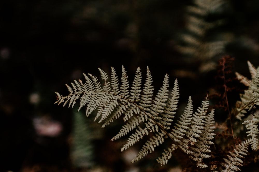 shallow focus of fern plant