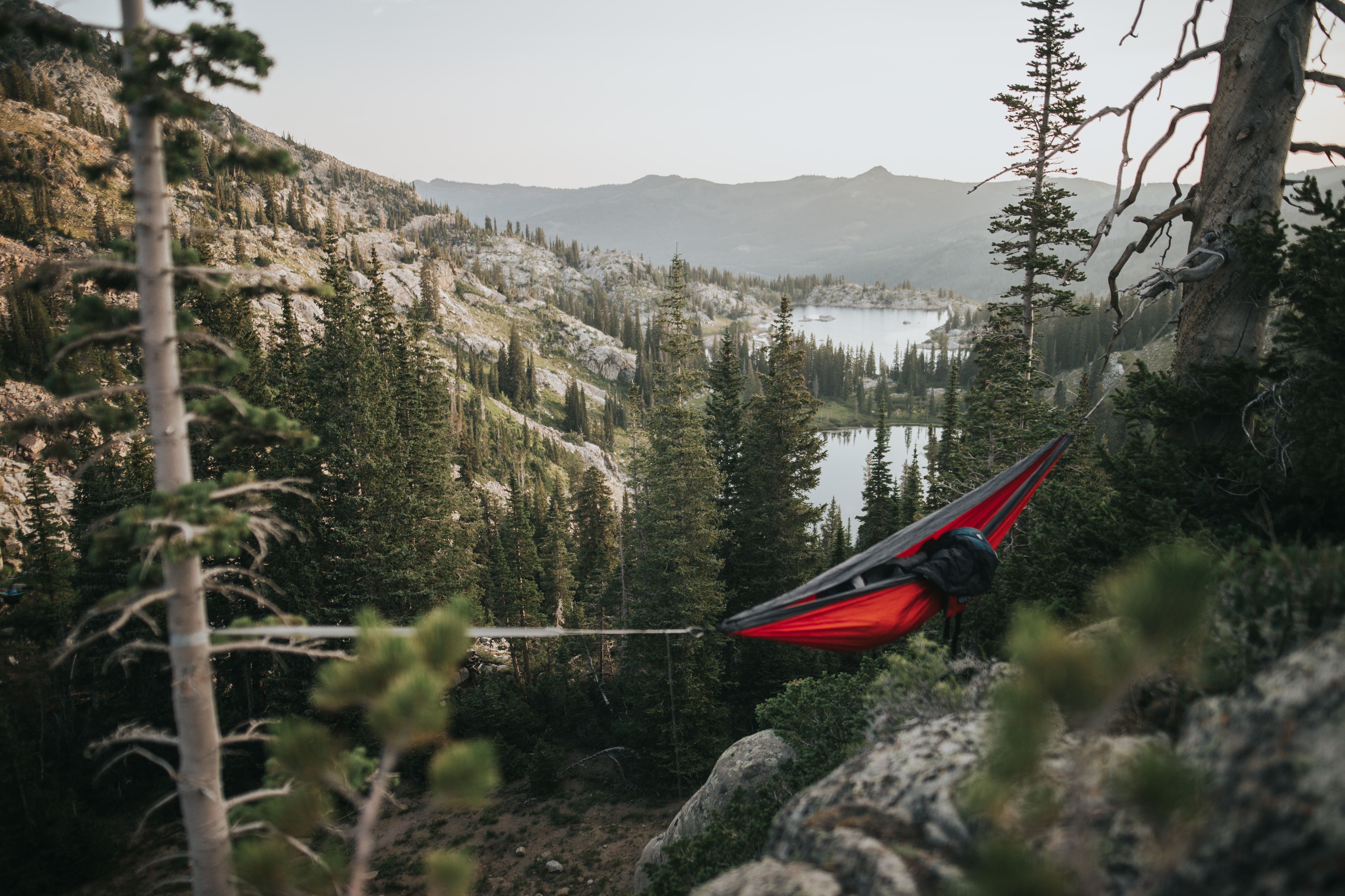 red and black hammock on forest