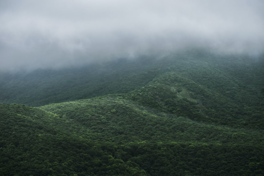 aerial photography of mountain with trees