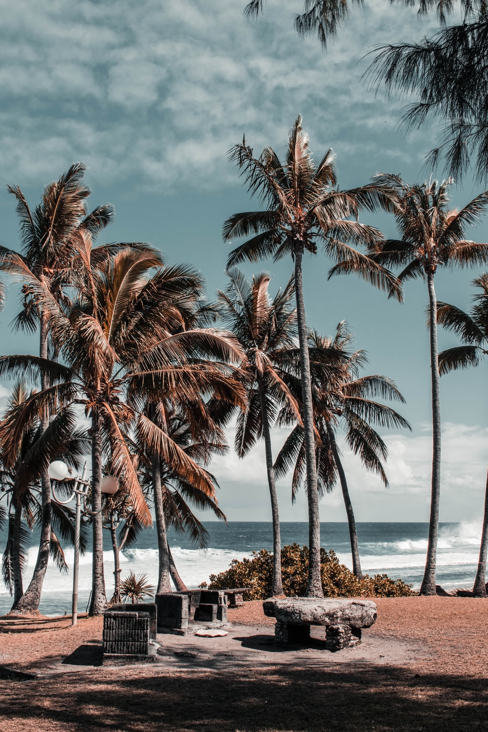 field of palm trees on shore