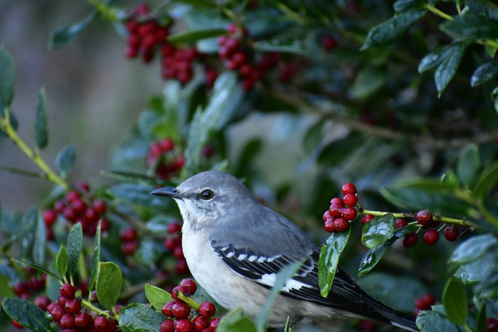 selective focus photography of mockingbird