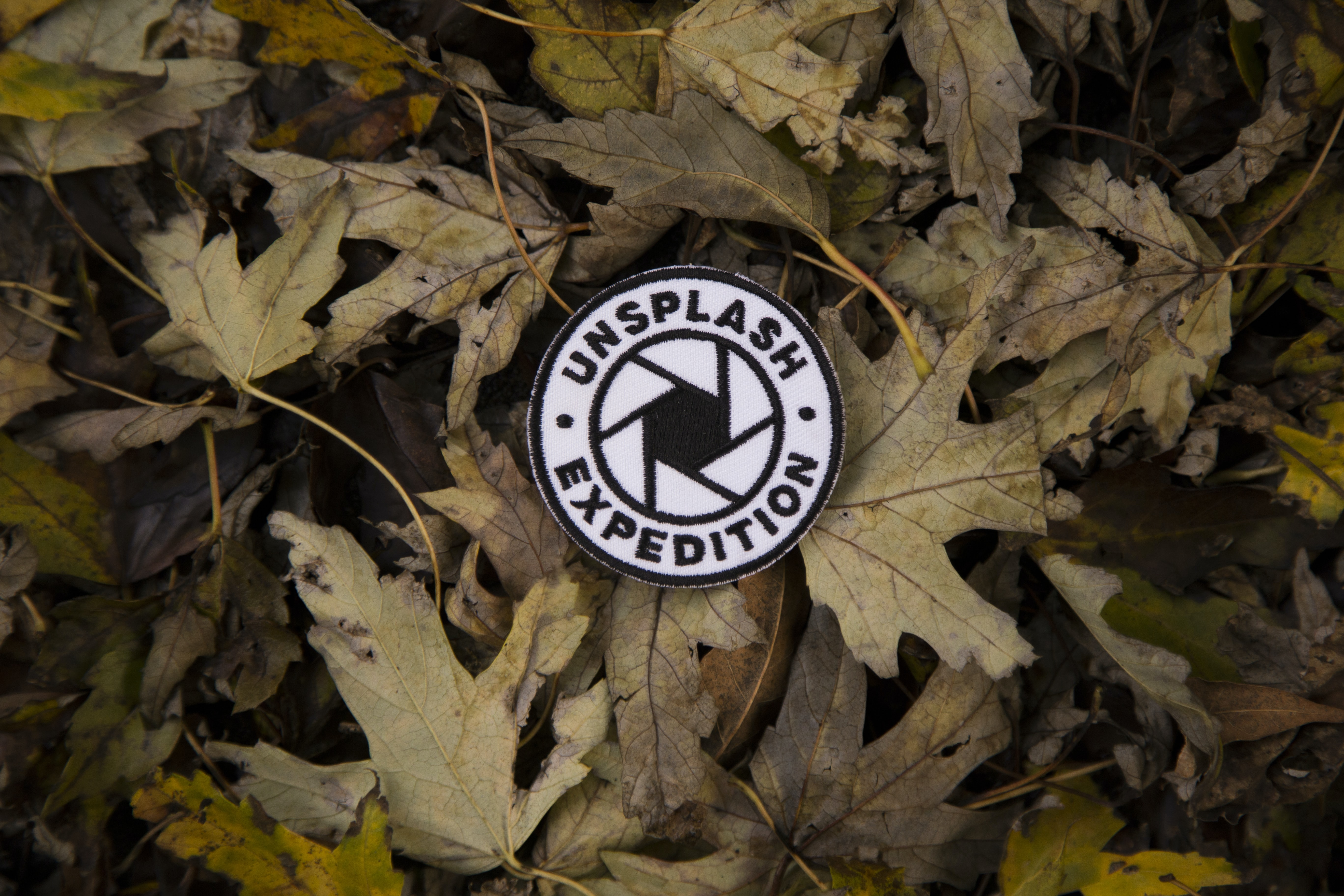 unsplash expedition patch on leaves