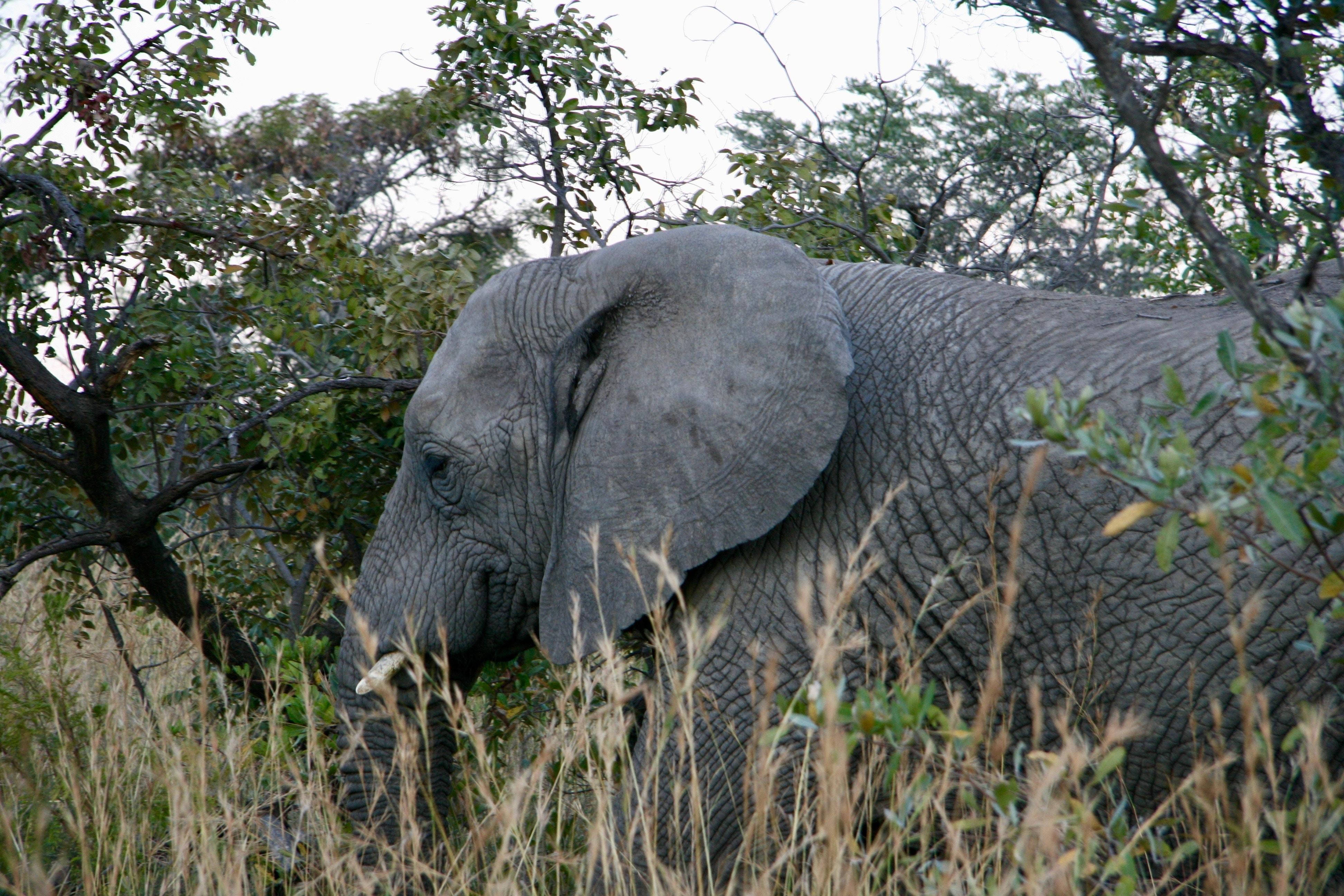 gray elephant beside trees during daytime
