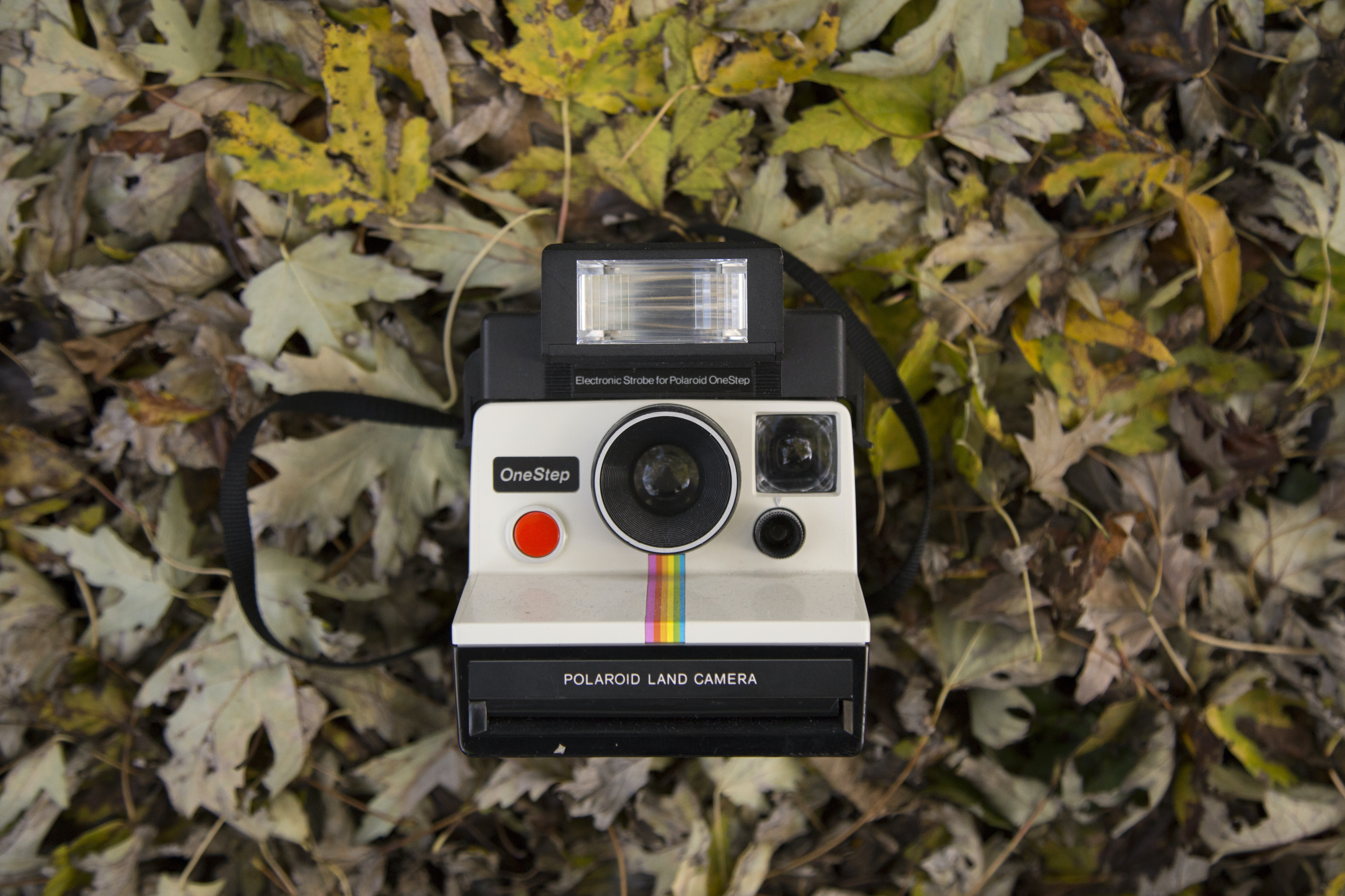 black and gray Polaroid land camera on dried leaves
