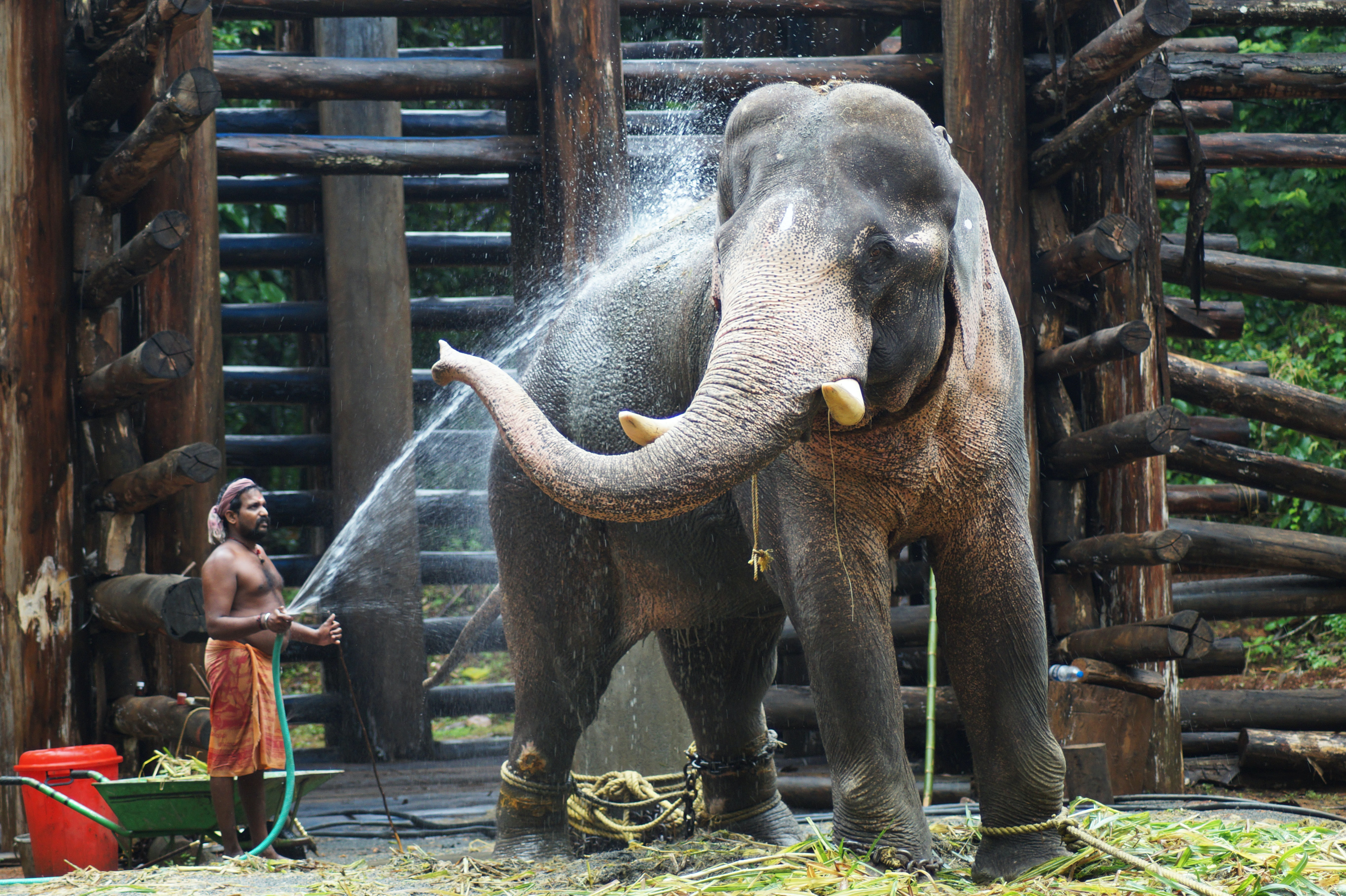 topless holding hose standing beside elephant