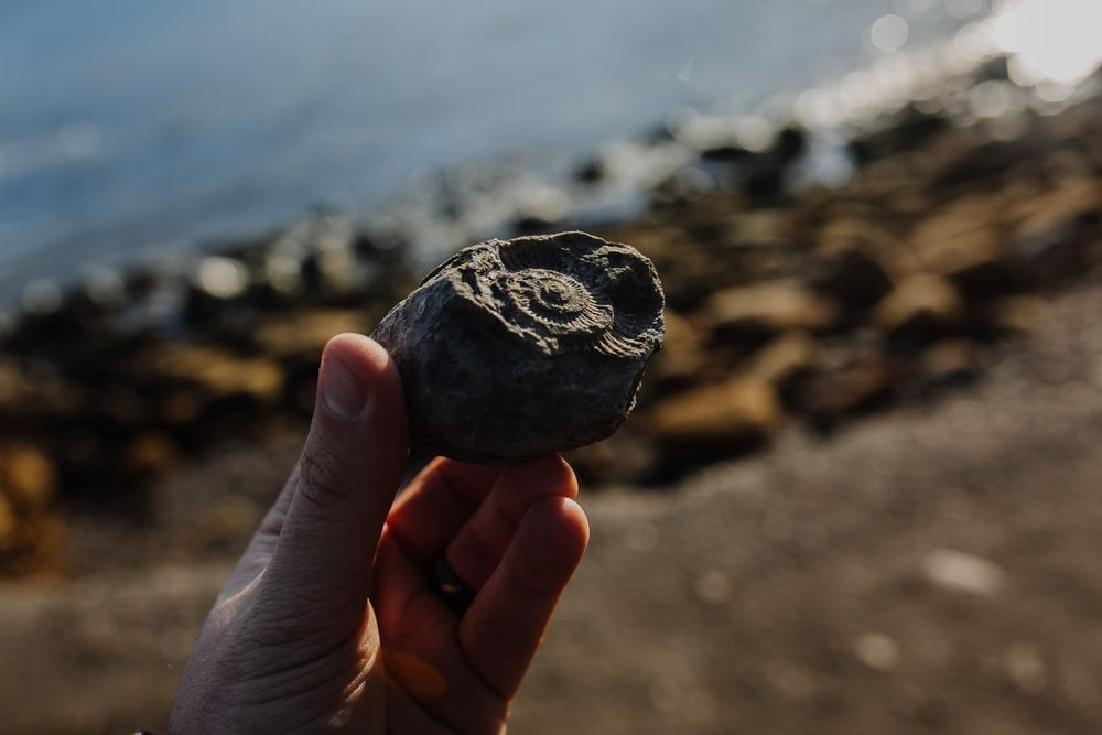 selective focus photography of person holding stone