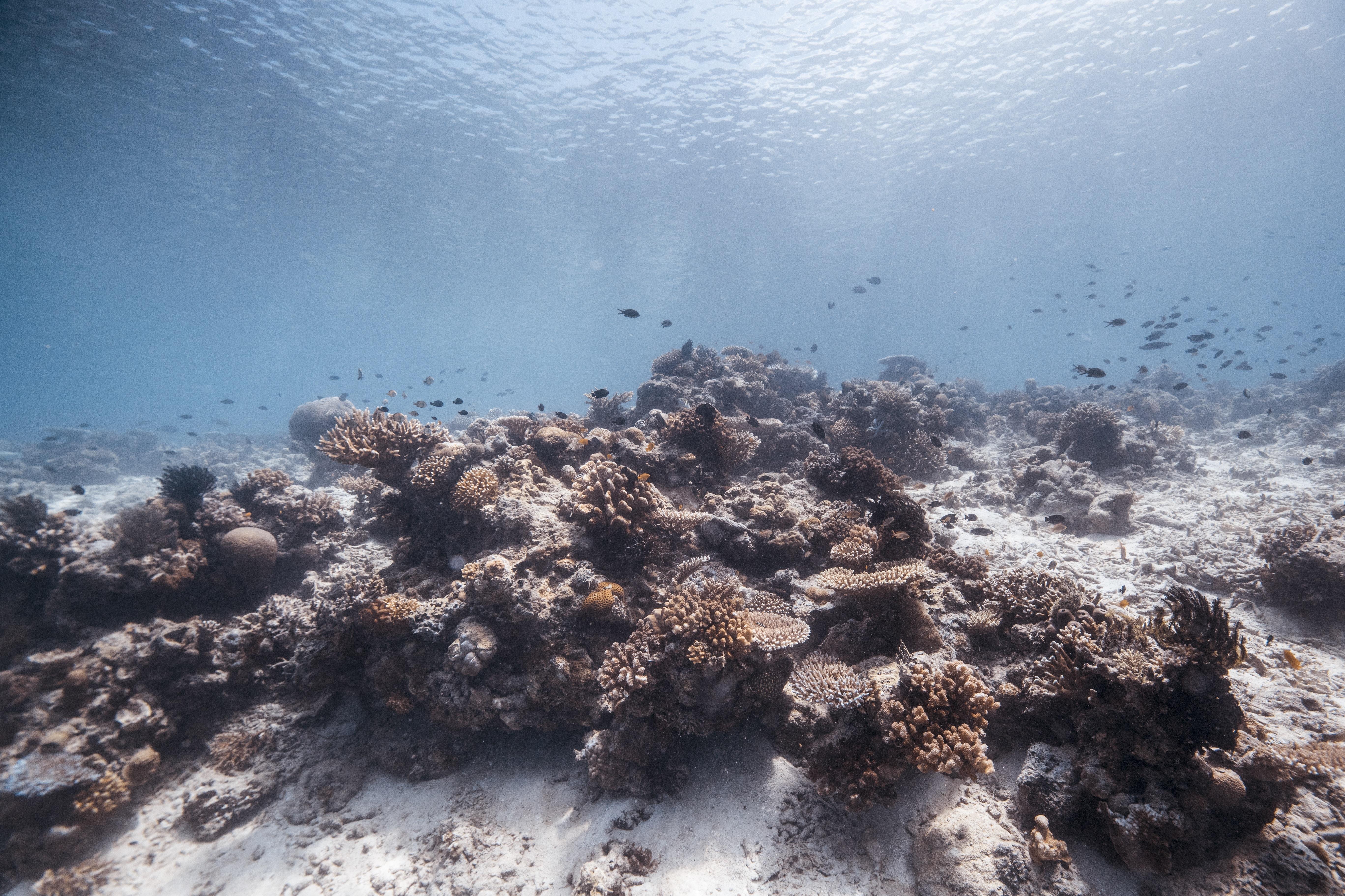 brown coral reef underwater