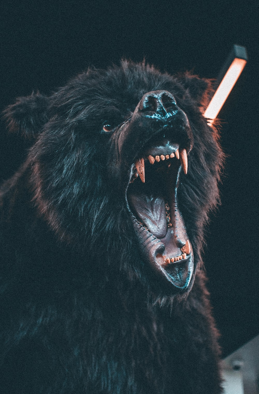 roaring brown bear
