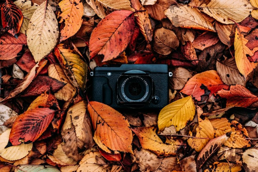 black camera on dried leaves