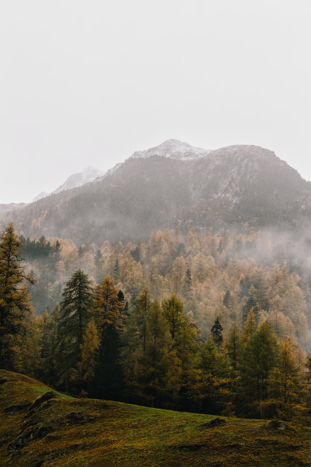 mountain with brown trees