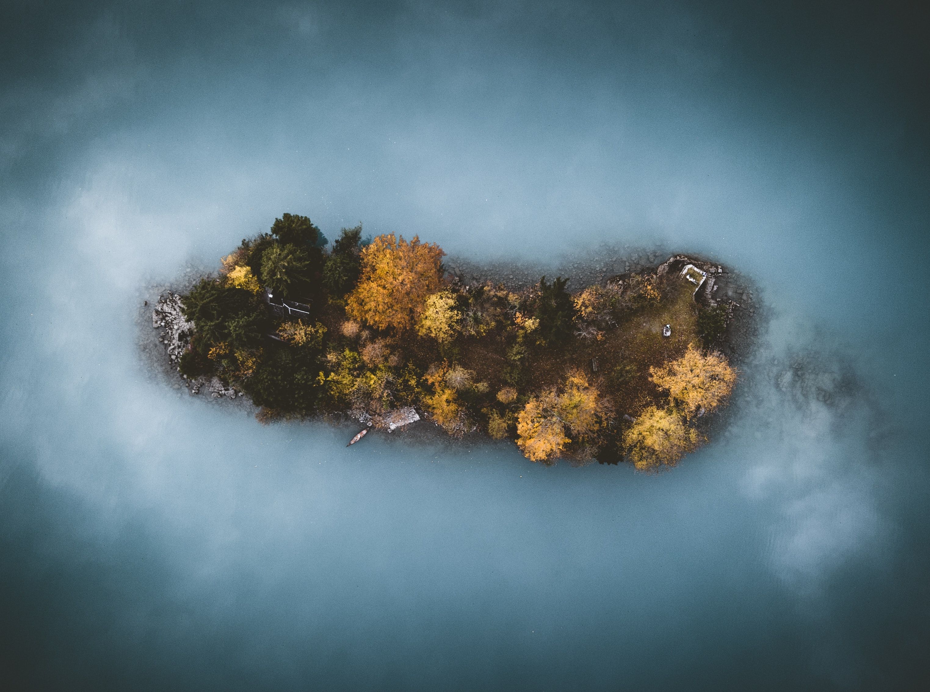 brown trees aerial photography