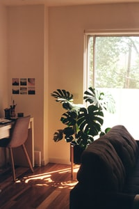 This was taken on 35mm film (Kodak 200) in Melbourne, Australia on a visit to see our friends. There is something so fulfilling about simply sitting and talking for hours, watching the sun stream through the windows and move across the floor. I loved the position of this Monstera, with some of my other photography pieces my friend had collected on the wall, always supporting.