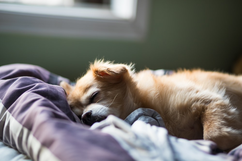 dog sleeping on bed