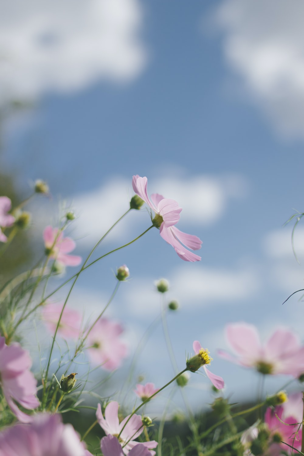 focus photography of pink flower