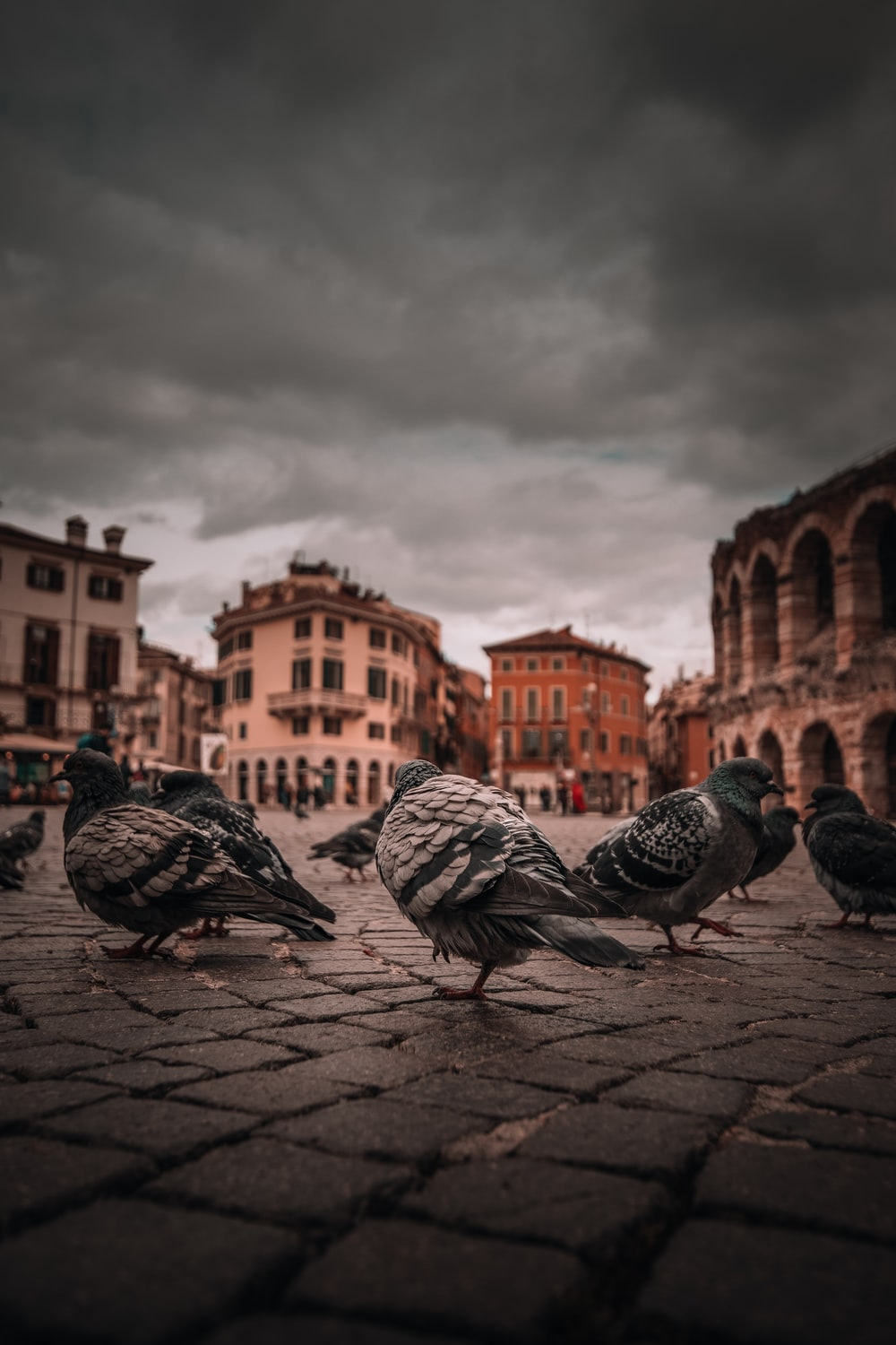 selective focus photography of pigeons