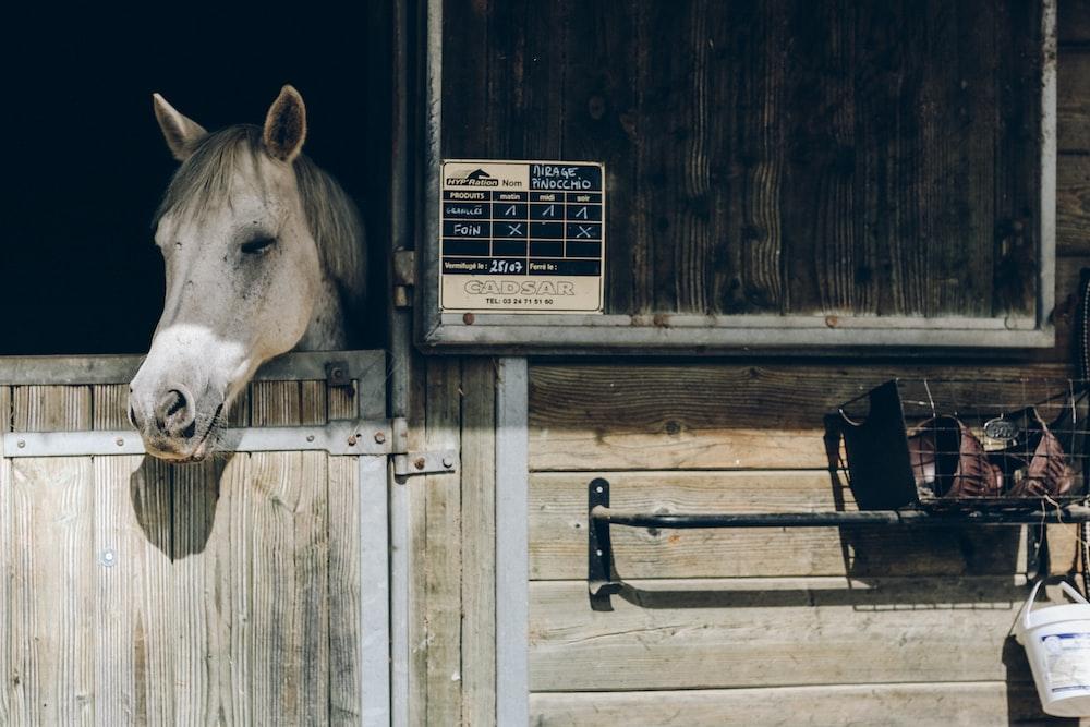 gray horse behind brown door