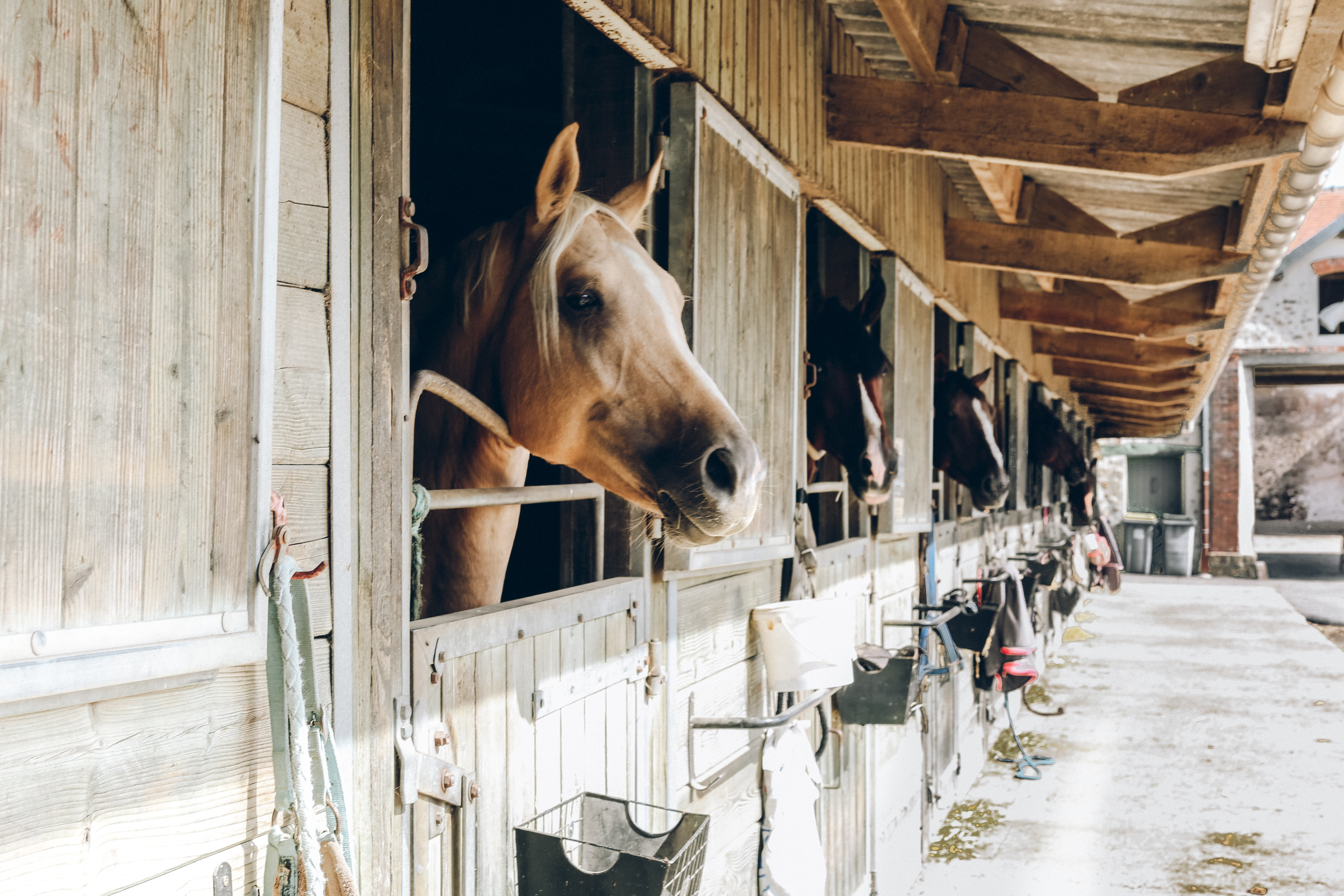 group of horse inside wooden cage during daytime