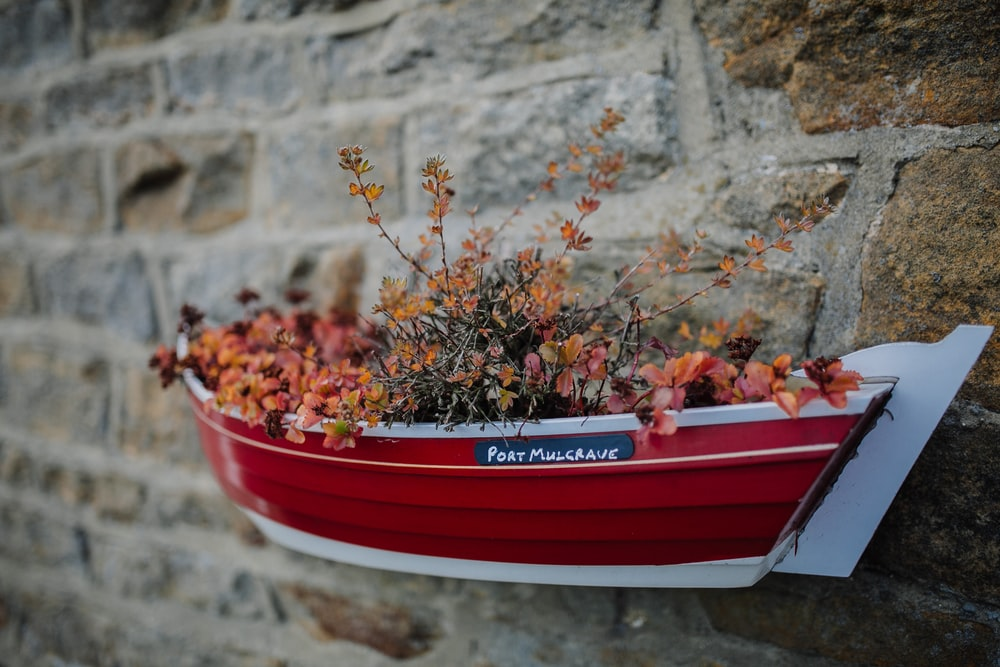 red and white canoe boat-designed hanging flower pot on concrete wall