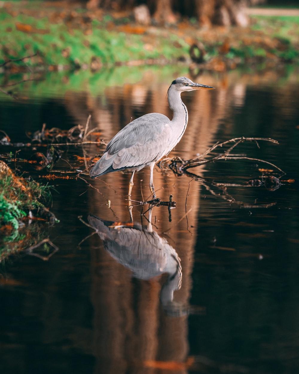 white bird on body of water near land