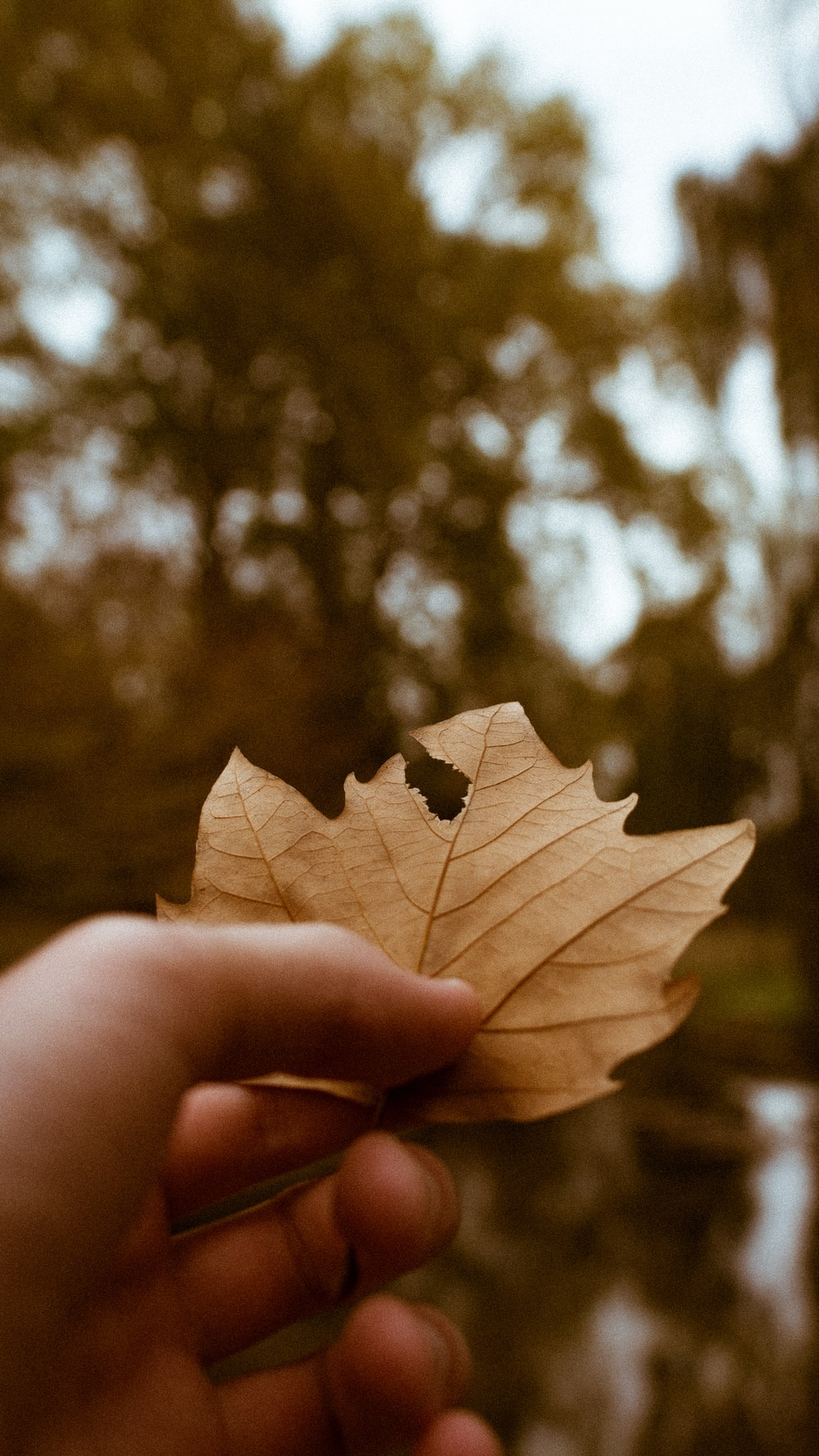 persons hand holding dried leaf close-up photography