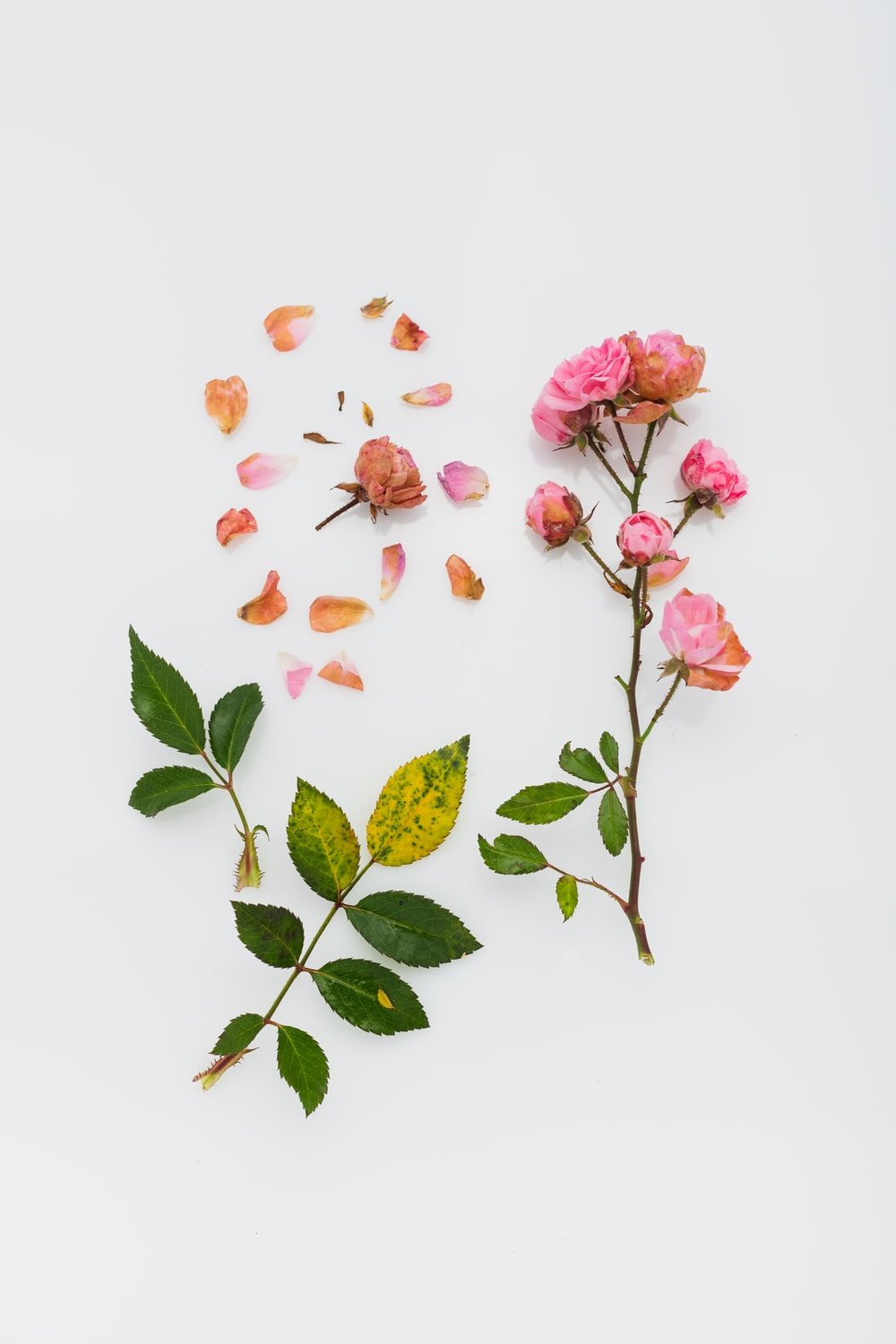 pink petaled flowers on white surface