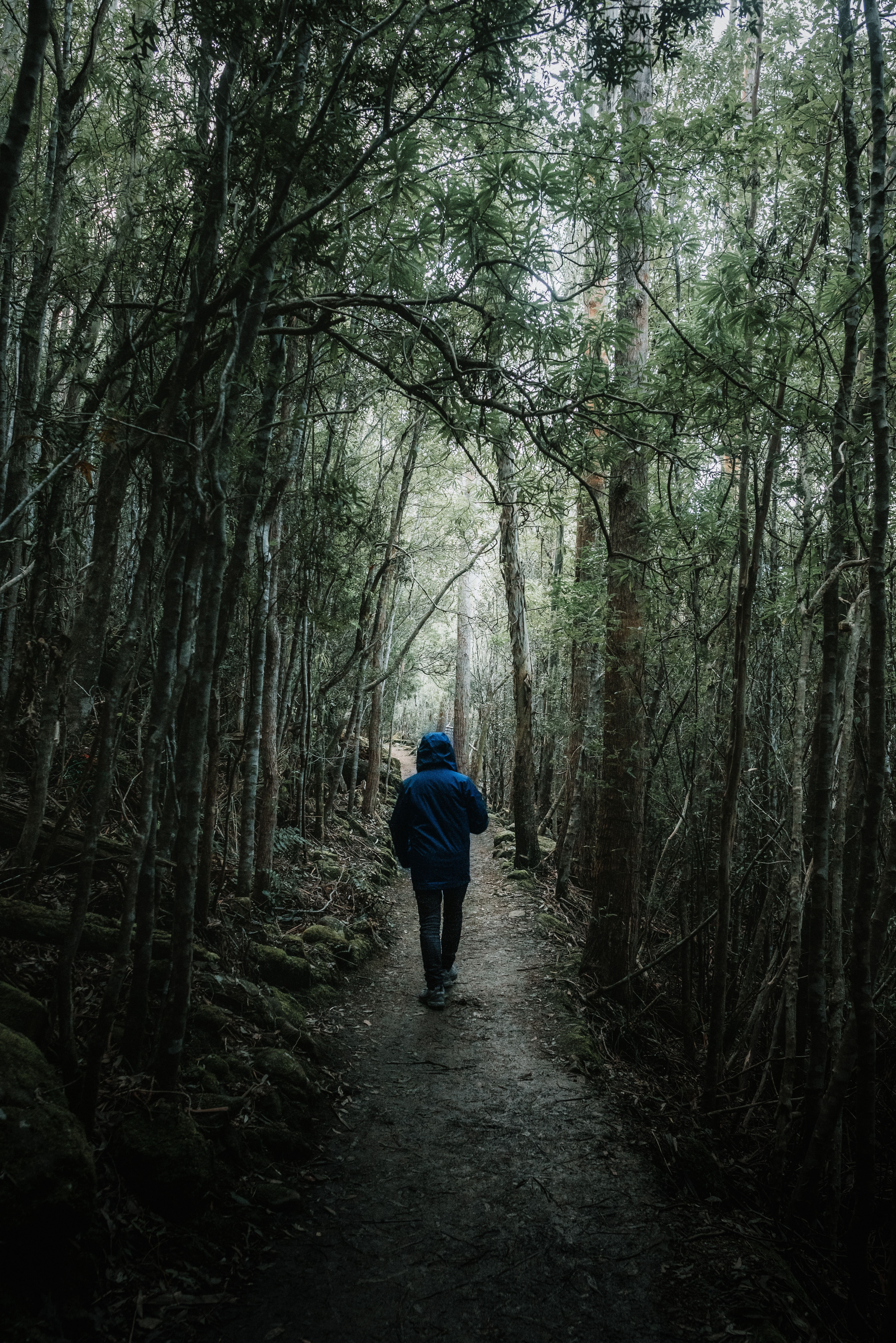 man walking on forest dirt path