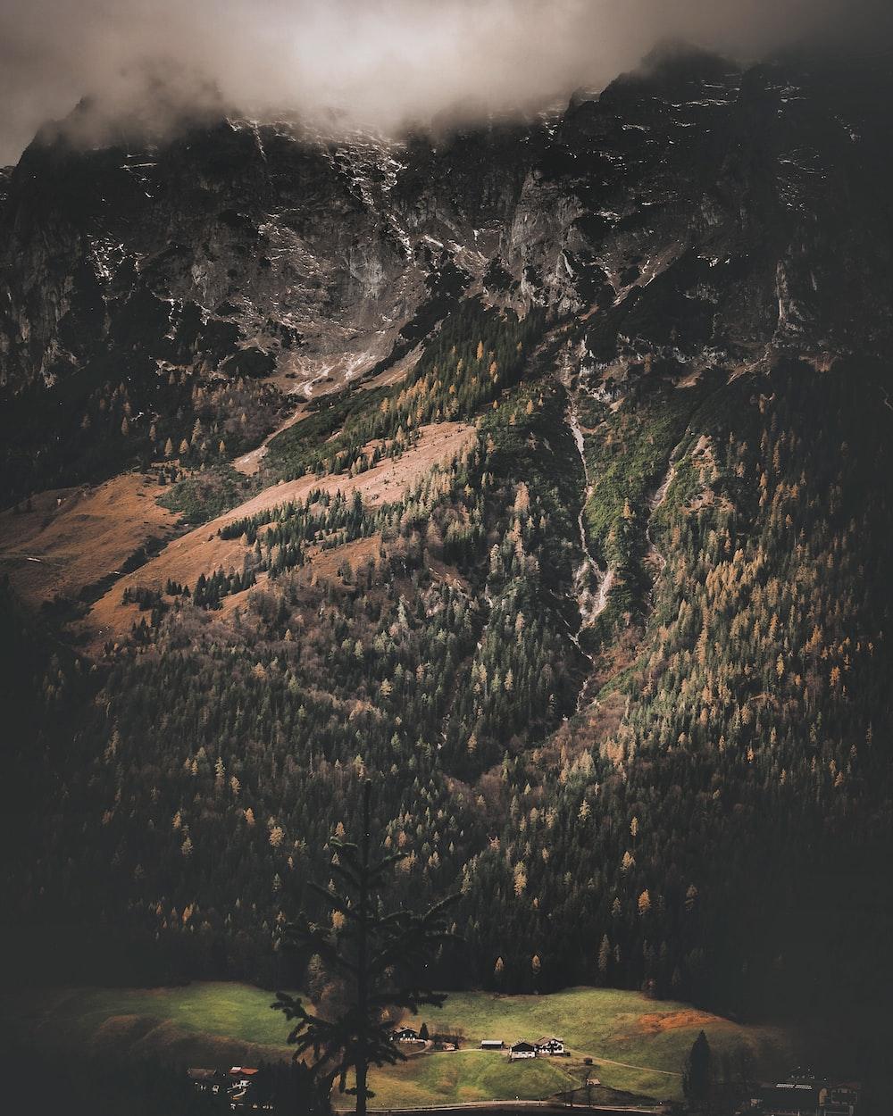 mountain full of trees
