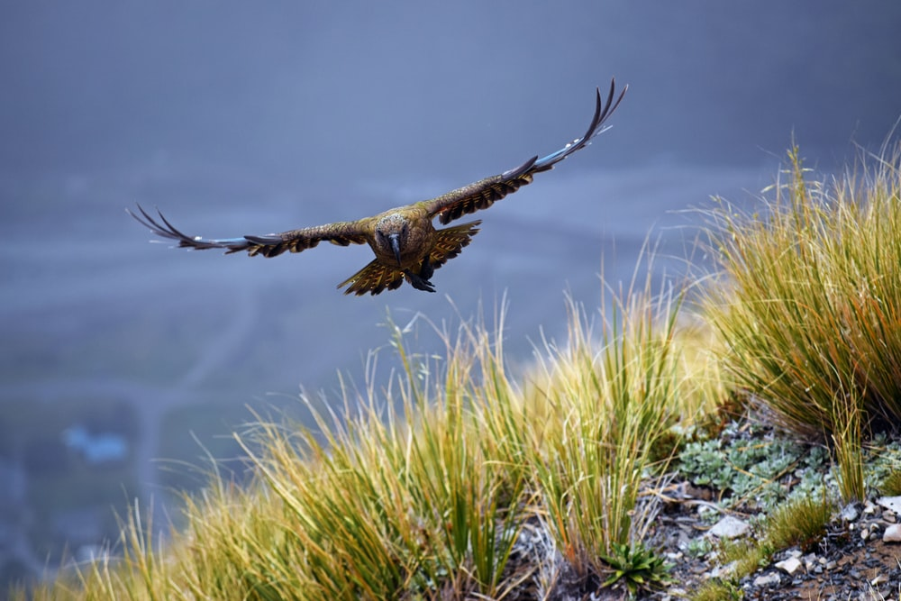 selective focus photography of brown soaring eagle