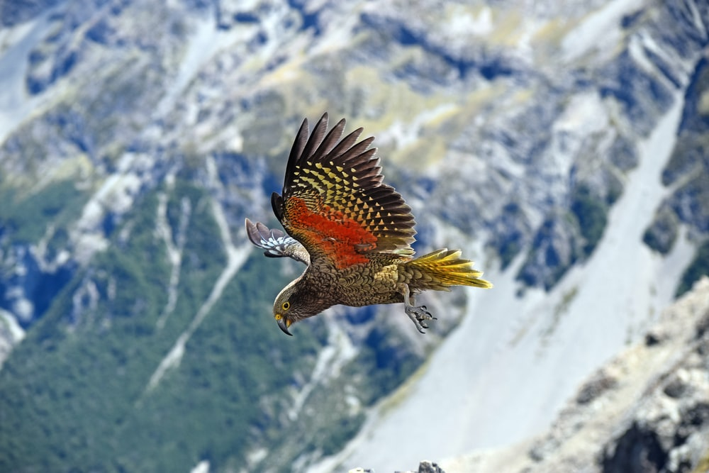 multicolored parrot flying during daytime
