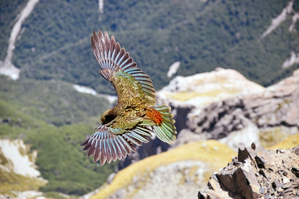 multicolored bird flying during daytime
