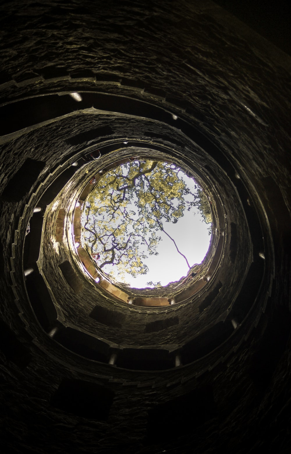 low angle photography of tree in tunnel