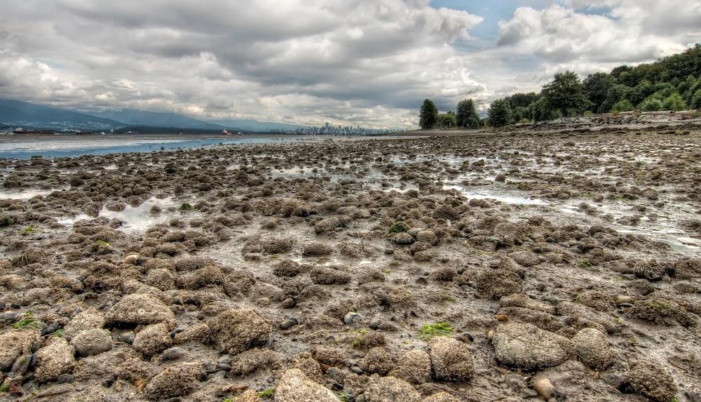 rocks on ground near body of water