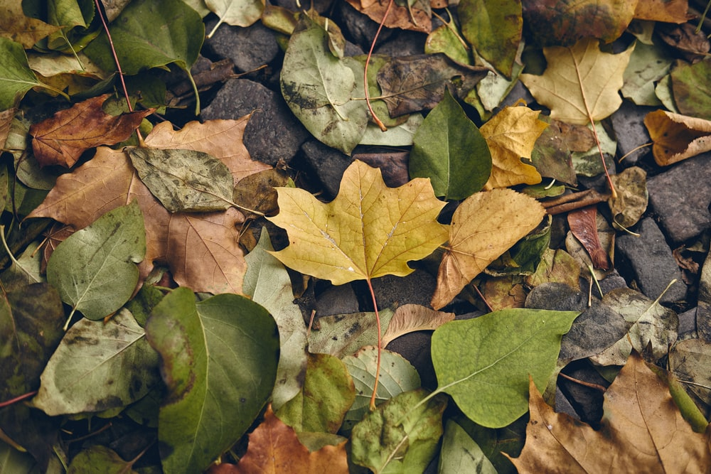 green and brown leaves on ground