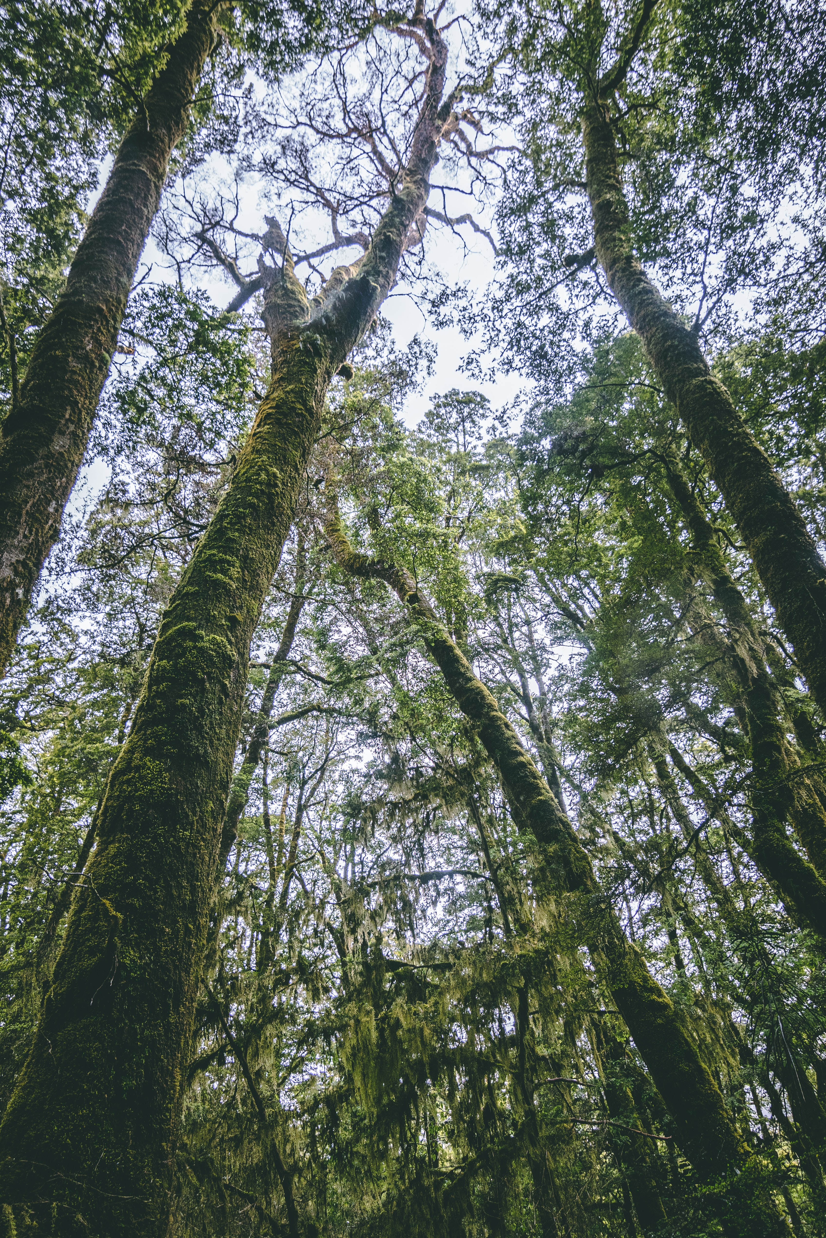 low angle photography of mossy trees