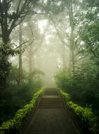 Best Guidance on Mist  mist stories