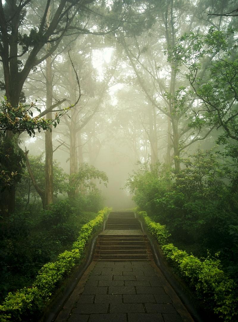 【藍月】第一百九十五話、必然的巧合中 #黑森林