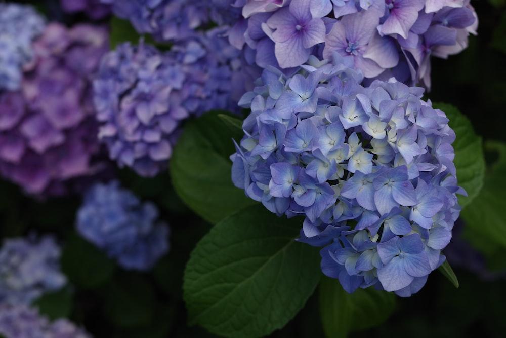 bunch of purple flowers blooming