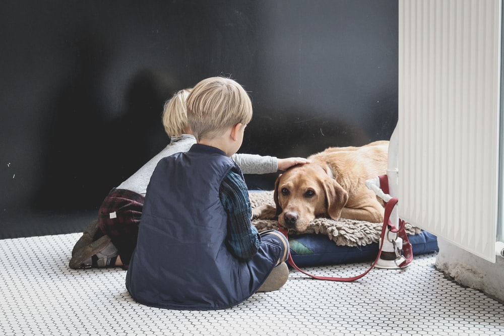 boy sitting in front of dog
