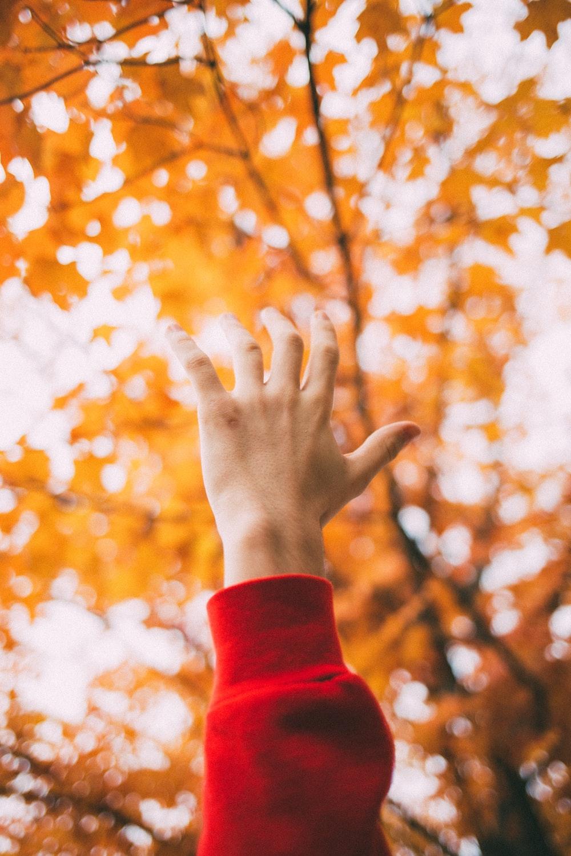 left human hand raising front of maple tree