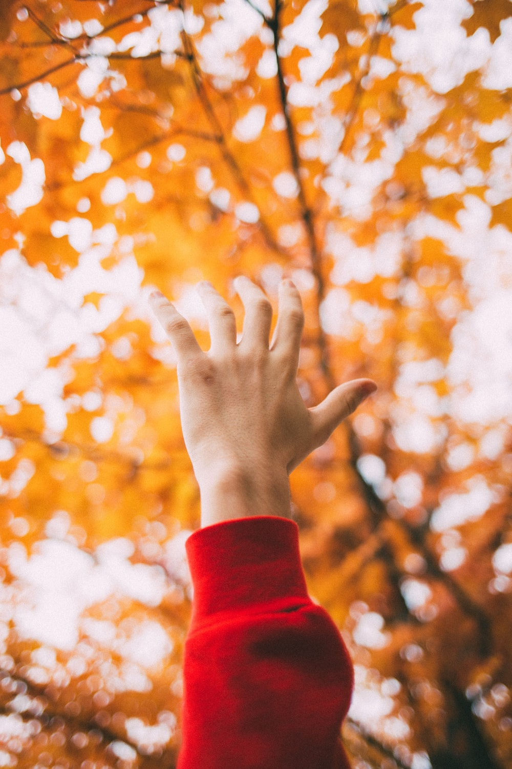 left human hand raising front of maple tree