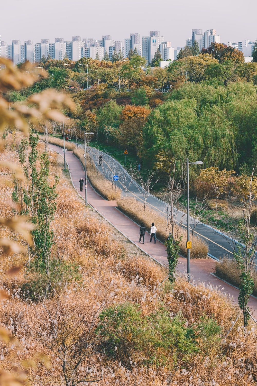 people walking on road surrounded with trees